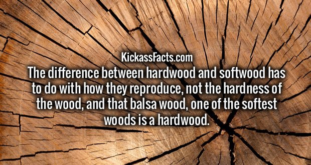 https://www.gizmodo.com.au/2015/05/the-difference-between-hard-and-soft-wood-has-zero-to-do-with-hardness/