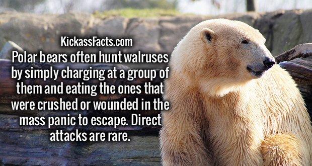 https://en.wikipedia.org/wiki/Walrus#Predation