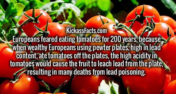 Europeans feared eating tomatoes for 200 years, because when wealthy Europeans using pewter plates, high in lead content, ate tomatoes off the plates, the high acidity in tomatoes would cause the fruit to leach lead from the plate, resulting in many deaths from lead poisoning.