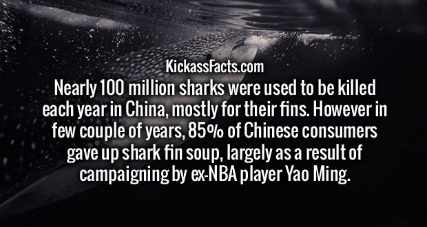 Nearly 100 million sharks were used to be killed each year in China, mostly for their fins. However in few couple of years, 85% of Chinese consumers gave up shark fin soup, largely as a result of campaigning by ex-NBA player Yao Ming.