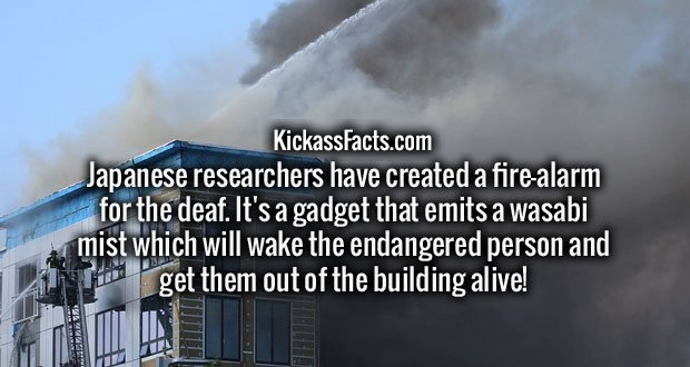 Japanese researchers have created a fire-alarm for the deaf. It's a gadget that emits a wasabi mist which will wake the endangered person and get them out of the building alive!