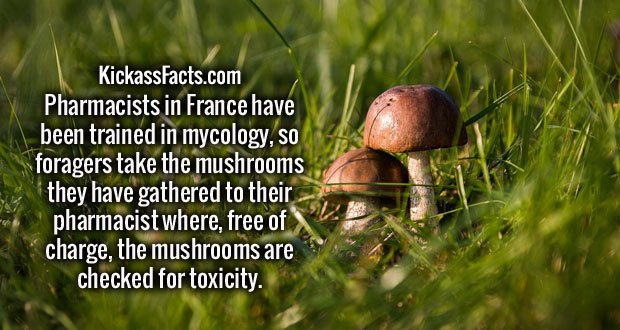 Pharmacists in France have been trained in mycology, so foragers take the mushrooms they have gathered to their pharmacist where, free of charge, the mushrooms are checked for toxicity.