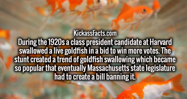 During the 1920s a class president candidate at Harvard swallowed a live goldfish in a bid to win more votes. The stunt created a trend of goldfish swallowing which became so popular that eventually Massachusetts state legislature had to create a bill banning it.