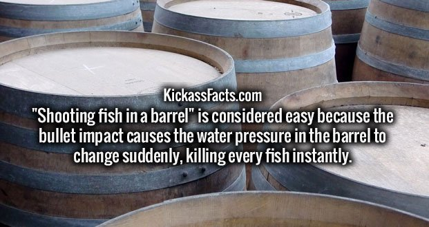 """Shooting fish in a barrel"" is considered easy because the bullet impact causes the water pressure in the barrel to change suddenly, killing every fish instantly."