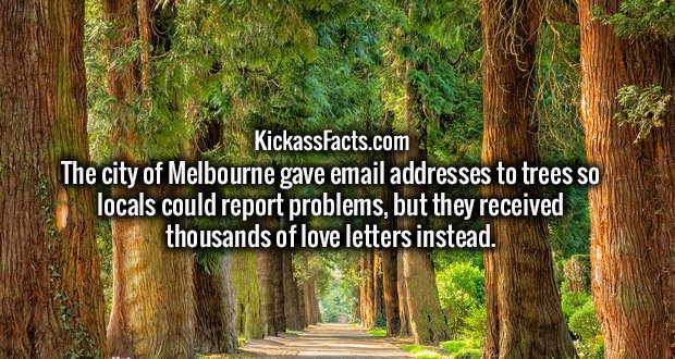 The city of Melbourne gave email addresses to trees so locals could report problems, but they received thousands of love letters instead.
