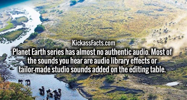 Planet Earth series has almost no authentic audio. Most of the sounds you hear are audio library effects or tailor-made studio sounds added on the editing table.