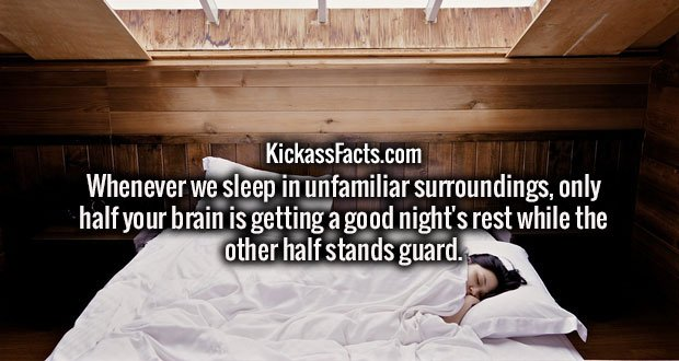 Whenever we sleep in unfamiliar surroundings, only half your brain is getting a good night's rest while the other half stands guard.