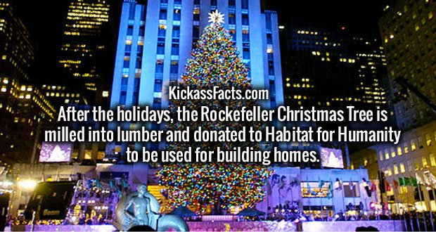 After the holidays, the Rockefeller Christmas Tree is milled into lumber and donated to Habitat for Humanity to be used for building homes.