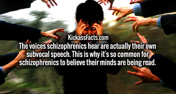 The voices schizophrenics hear are actually their own subvocal speech. This is why it's so common for schizophrenics to believe their minds are being read.