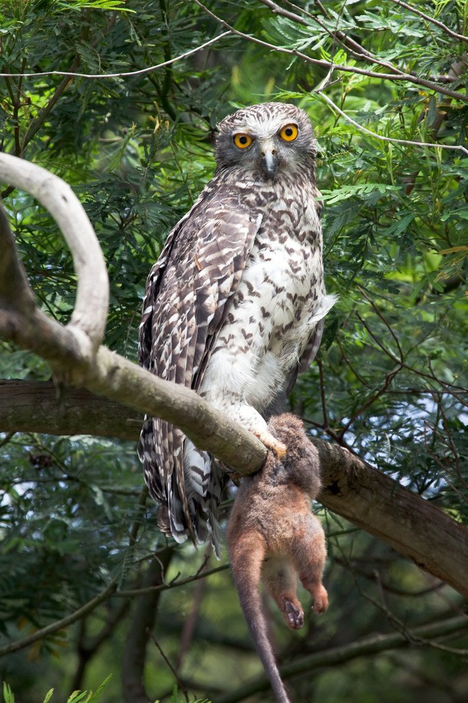 Owl Facts - 16 Interesting Facts About Owls | KickassFacts.com