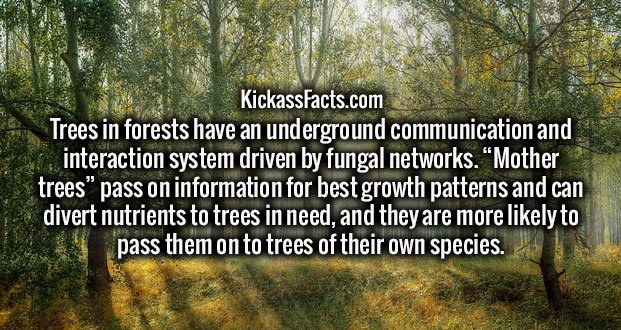 "Trees in forests have an underground communication and interaction system driven by fungal networks. ""Mother trees"" pass on information for best growth patterns and can divert nutrients to trees in need, and they are more likely to pass them on to trees of their own species."