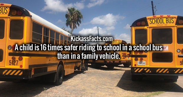 A child is 16 times safer riding to school in a school bus than in a family vehicle.