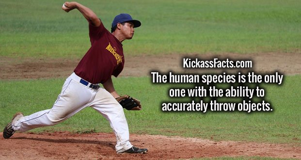 The human species is the only one with the ability to accurately throw objects.