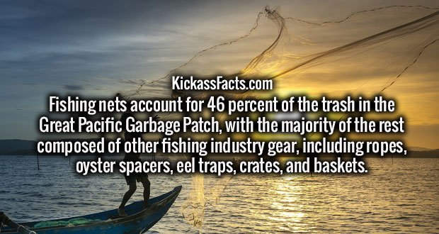 Fishing nets account for 46 percent of the trash in the Great Pacific Garbage Patch, with the majority of the rest composed of other fishing industry gear, including ropes, oyster spacers, eel traps, crates, and baskets.