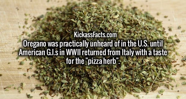 "Oregano was practically unheard of in the U.S. until American G.I.s in WWII returned from Italy with a taste for the ""pizza herb""."