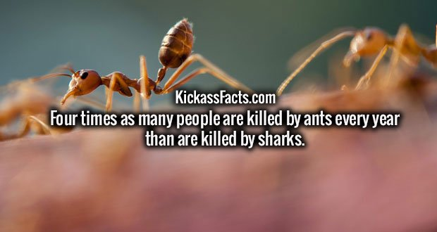 Four times as many people are killed by ants every year than are killed by sharks.