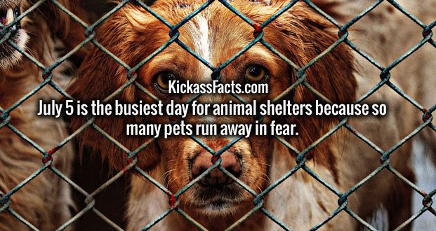July 5 is the busiest day for animal shelters because so many pets run away in fear.