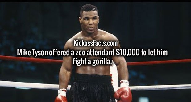 Mike Tyson offered a zoo attendant $10,000 to let him fight a gorilla.