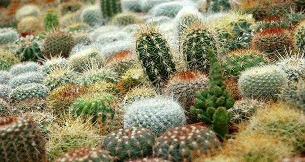 1 5 Cactus Facts