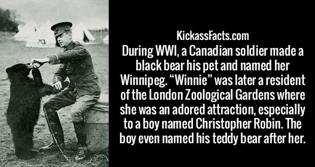 """During WWI, a Canadian soldier made a black bear his pet and named her Winnipeg. """"Winnie"""" was later a resident of the London Zoological Gardens where she was an adored attraction, especially to a boy named Christopher Robin. The boy even named his teddy bear after her."""
