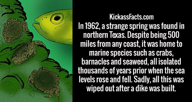 In 1962, a strange spring was found in northern Texas. Despite being 500 miles from any coast, it was home to marine species such as crabs, barnacles and seaweed, all isolated thousands of years prior when the sea levels rose and fell. Sadly, all this was wiped out after a dike was built.