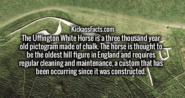 The Uffington White Horse is a three thousand year old pictogram made of chalk. The horse is thought to be the oldest hill figure in England and requires regular cleaning and maintenance, a custom that has been occurring since it was constructed.