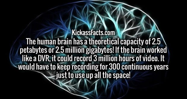 The human brain has a theoretical capacity of 2.5 petabytes or 2.5 million gigabytes! If the brain worked like a DVR, it could record 3 million hours of video. It would have to keep recording for 300 continuous years just to use up all the space!