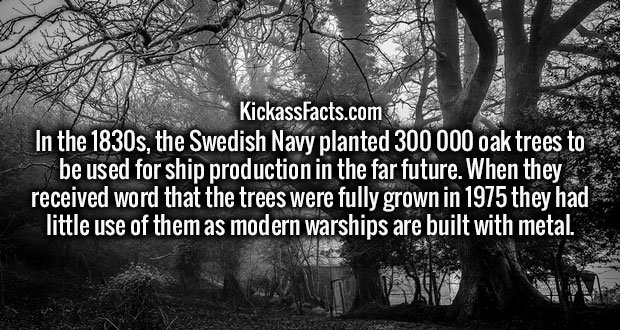 In the 1830s, the Swedish Navy planted 300 000 oak trees to be used for ship production in the far future. When they received word that the trees were fully grown in 1975 they had little use of them as modern warships are built with metal.