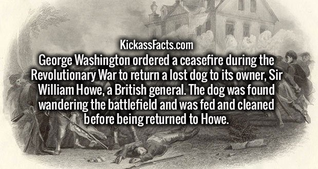 George Washington ordered a ceasefire during the Revolutionary War to return a lost dog to its owner, Sir William Howe, a British general. The dog was found wandering the battlefield and was fed and cleaned before being returned to Howe.