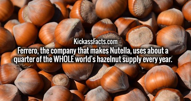 Ferrero, the company that makes Nutella, uses about a quarter of the WHOLE world's hazelnut supply every year.