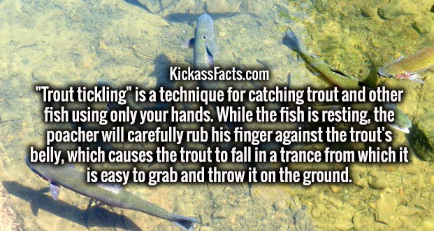"""Trout tickling"" is a technique for catching trout and other fish using only your hands. While the fish is resting, the poacher will carefully rub his finger against the trout's belly, which causes the trout to fall in a trance from which it is easy to grab and throw it on the ground."