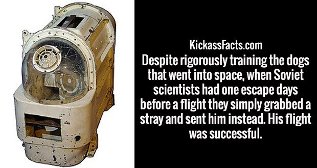 Despite rigorously training the dogs that went into space, when Soviet scientists had one escape days before a flight they simply grabbed a stray and sent him instead. His flight was successful.