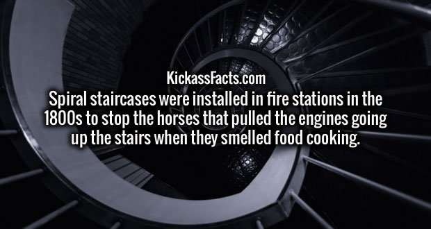 Spiral staircases were installed in fire stations in the 1800s to stop the horses that pulled the engines going up the stairs when they smelled food cooking.