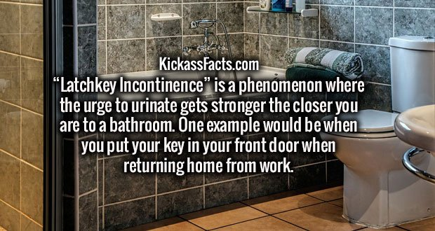 """""""Latchkey Incontinence"""" is a phenomenon where the urge to urinate gets stronger the closer you are to a bathroom. One example would be when you put your key in your front door when returning home from work."""
