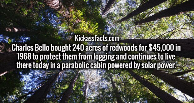 Charles Bello bought 240 acres of redwoods for $45,000 in 1968 to protect them from logging and continues to live there today in a parabolic cabin powered by solar power.