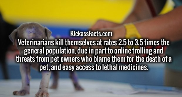 Veterinarians kill themselves at rates 2.5 to 3.5 times the general population, due in part to online trolling and threats from pet owners who blame them for the death of a pet, and easy access to lethal medicines.