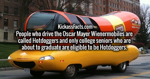 People who drive the Oscar Mayer Wienermobiles are called Hotdoggers and only college seniors who are about to graduate are eligible to be Hotdoggers.