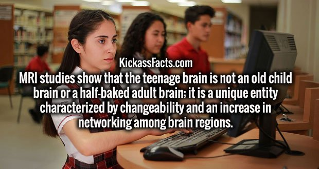 MRI studies show that the teenage brain is not an old child brain or a half-baked adult brain; it is a unique entity characterized by changeability and an increase in networking among brain regions.