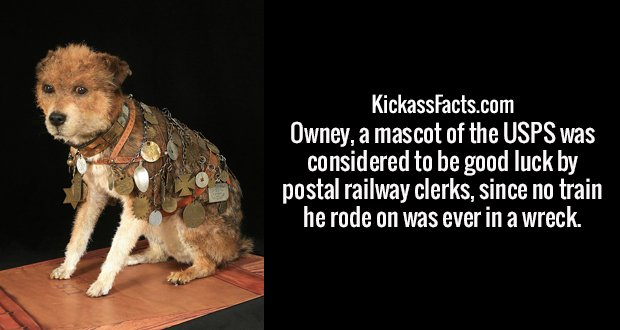 Owney, a mascot of the USPS was considered to be good luck by postal railway clerks, since no train he rode on was ever in a wreck.