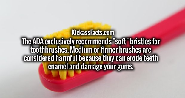 """The ADA exclusively recommends """"soft"""" bristles for toothbrushes. Medium or firmer brushes are considered harmful because they can erode teeth enamel and damage your gums."""