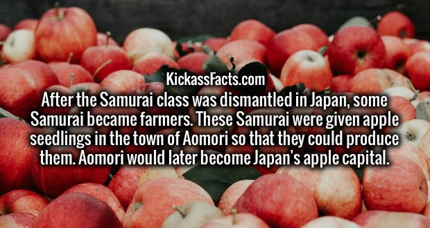 After the Samurai class was dismantled in Japan, some Samurai became farmers. These Samurai were given apple seedlings in the town of Aomori so that they could produce them. Aomori would later become Japan's apple capital.