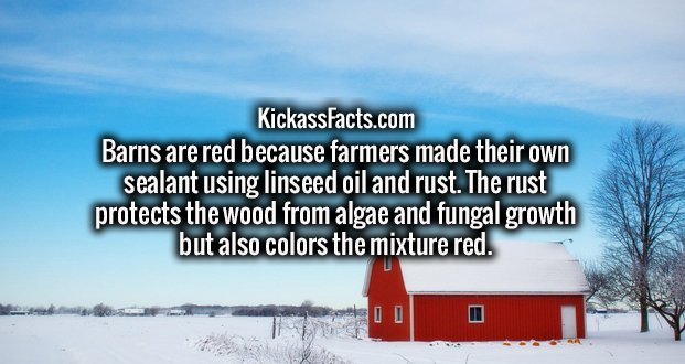 Barns are red because farmers made their own sealant using linseed oil and rust. The rust protects the wood from algae and fungal growth but also colors the mixture red.