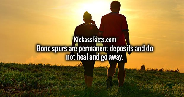Bone spurs are permanent deposits and do not heal and go away.
