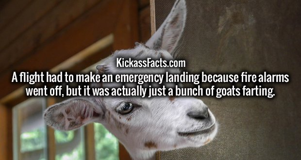 A flight had to make an emergency landing because fire alarms went off, but it was actually just a bunch of goats farting.