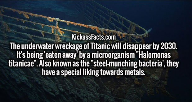 "The underwater wreckage of Titanic will disappear by 2030. It's being 'eaten away' by a microorganism ""Halomonas titanicae"". Also known as the ""steel-munching bacteria', they have a special liking towards metals."