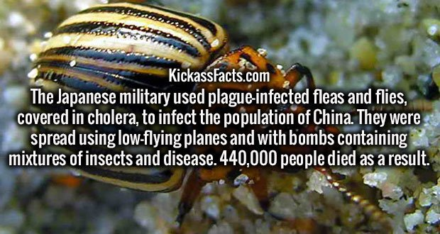 The Japanese military used plague-infected fleas and flies, covered in cholera, to infect the population of China. They were spread using low-flying planes and with bombs containing mixtures of insects and disease. 440,000 people died as a result.