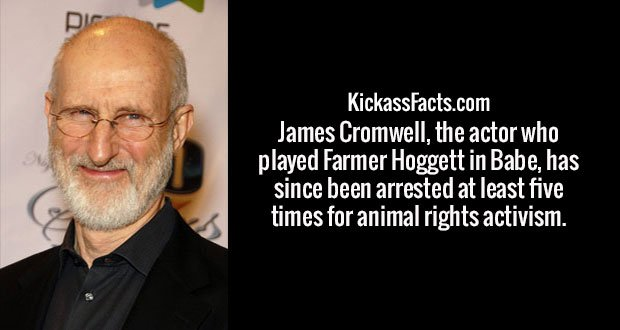 James Cromwell, the actor who played Farmer Hoggett in Babe, has since been arrested at least five times for animal rights activism.