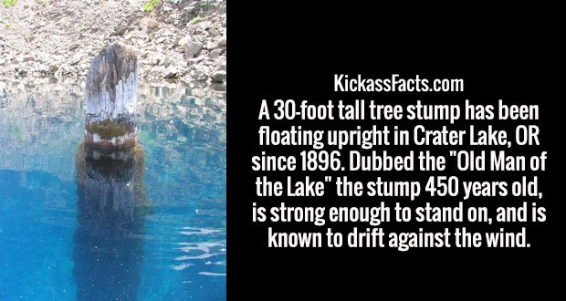 "A 30-foot tall tree stump has been floating upright in Crater Lake, OR since 1896. Dubbed the ""Old Man of the Lake"" the stump 450 years old, is strong enough to stand on, and is known to drift against the wind."