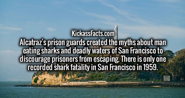 Alcatraz's prison guards created the myths about man eating sharks and deadly waters of San Francisco to discourage prisoners from escaping. There is only one recorded shark fatality in San Francisco in 1959.