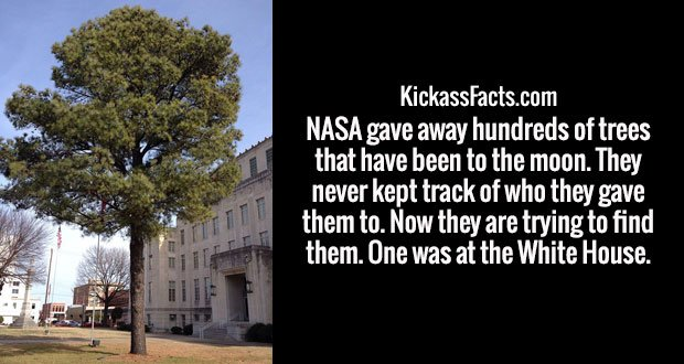 NASA gave away hundreds of trees that have been to the moon. They never kept track of who they gave them to. Now they are trying to find them. One was at the White House.